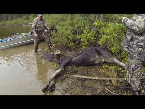 Remote Quebec Moose Hunt 2015