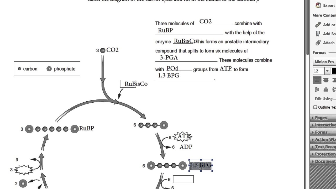 Calvin Cycle Worksheet 4