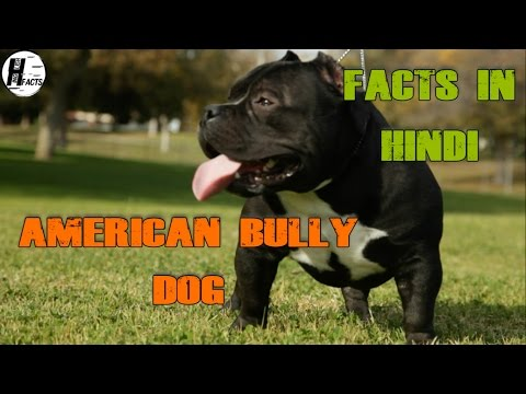 American Bully Dog Facts | Hindi | MIX DOG BREEDS | HINGLISH FACTS