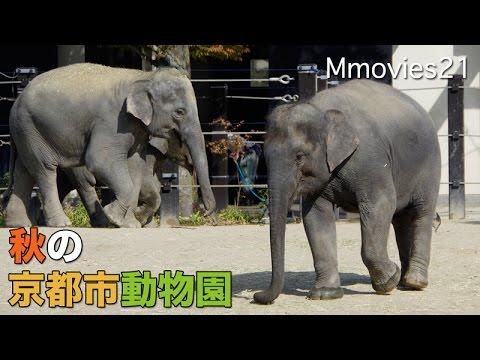 Kyoto city zoo 秋の京都市動物園(2015年10月17日)