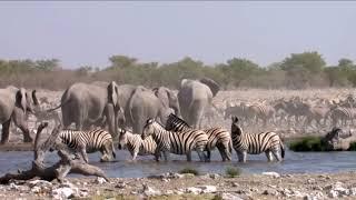 Najwspanialsi w królestwie zwierząt :  roślinożercy piątek 15:10