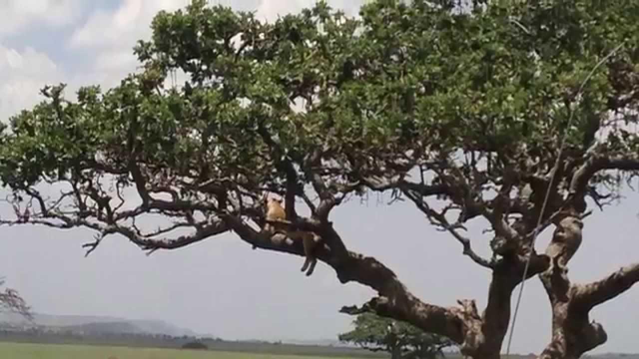 Потрясающее Путешествие в Африку! Видео Сделано на|кругосветное путешествие фотоотчет
