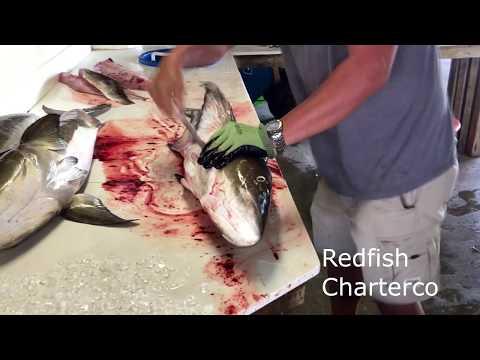 Redfishcharterco Clean Cobia
