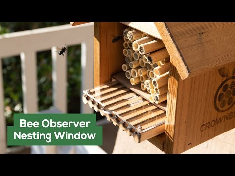 "Crown Bees Mason Bee Nesting Window - ""Bee Observer"""