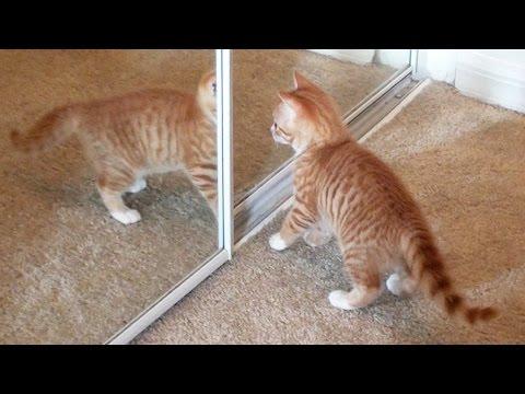 cat rescue nc