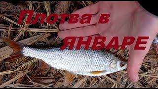 плотва в январе рыбалка в Запорожье 2021