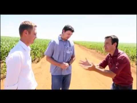 Conheça a família que produz 200 sacas de milho por hectare