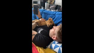 Puppy and Owner Growl and Bark at Each Other