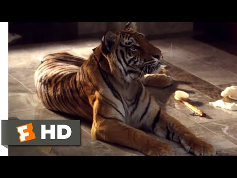 The Hangover (2009) - What Do Tigers Dream Of? Scene (8/10) | Movieclips
