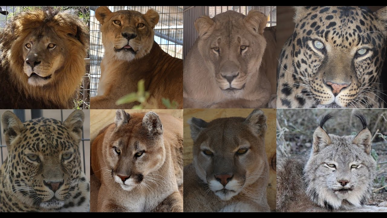 Keepers of the Wild | Exotic Animal Rescue Sanctuary