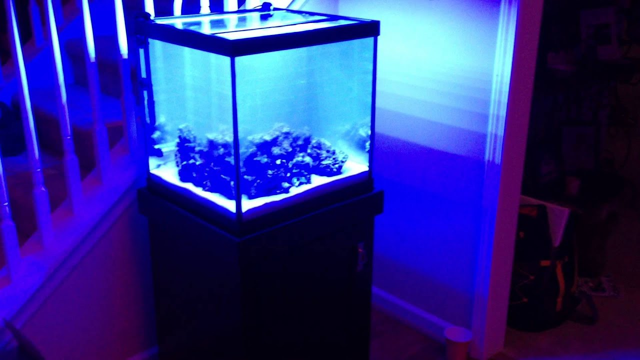 Video 2, 27 Gallon Marineland Saltwater Tank - YouTube