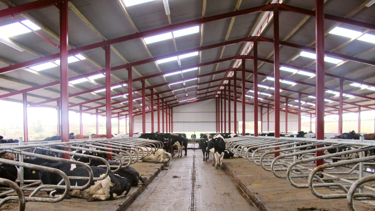 New cow cubicle shed in tipperary