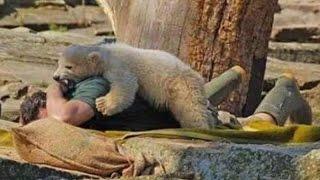 Жесть! Нападение бурого медведя на человека! Смотреть нападение медведя на человека!