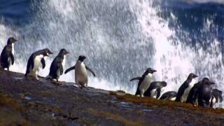 Mahom - Interlude Pour Les Pingouins