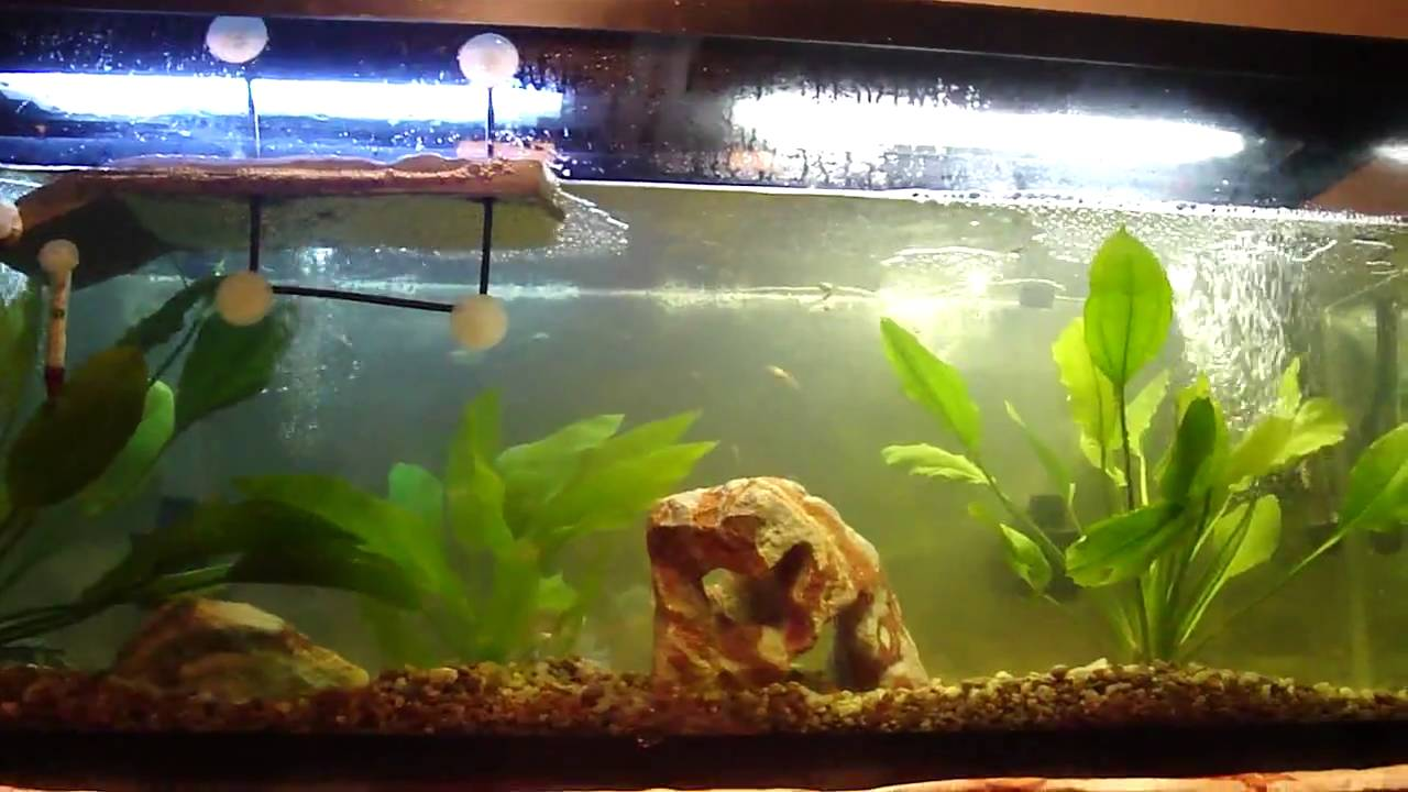 Update new 55 gallon turtle tank with fish youtube for Fish tank turtles