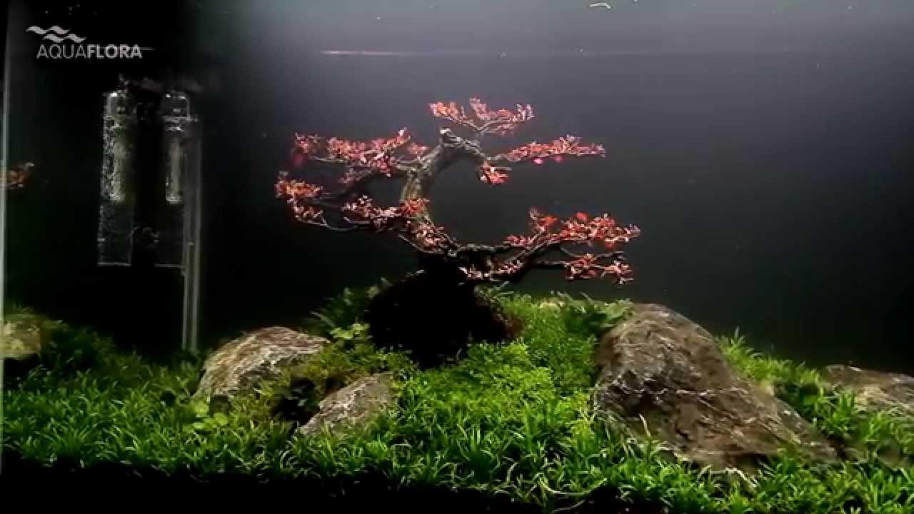 Bonsai Tree Aquarium Show Tank Tour Youtube