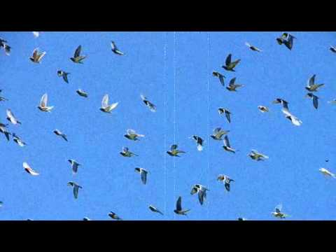 RZA - Flying Birds // 1 hour version // Ghost Dog Theme