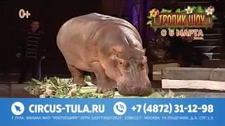 «Тропик шоу» в Тульском цирке