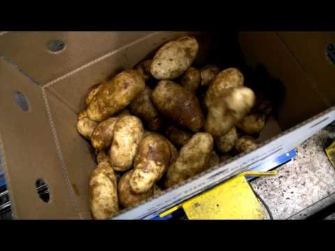 WaGrown Fresh Potatoes S4E6: Easterday Farms