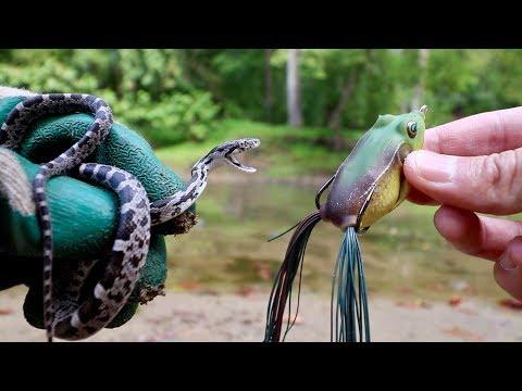 LIVE BAIT vs. ARTIFICIAL LURES -- FISHING EXPERIMENT!!! (Snake vs. Frog vs. Worm)