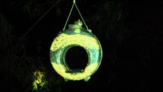 Flying Squirrel Eating Out Of Our Bird Feeder
