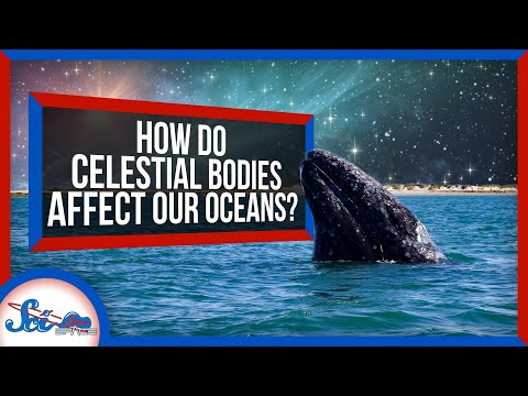 How Celestial Bodies Affect Life in the Ocean