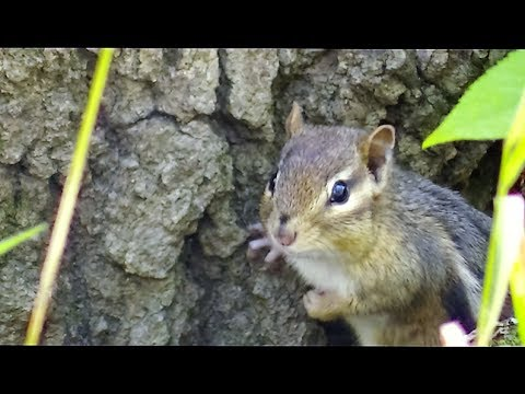 Videos & Movies for Cats to Watch Squirrels - Squirrel World
