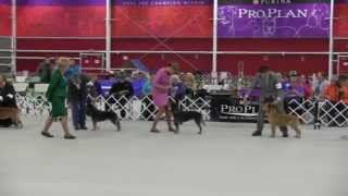 Australian Cattle Dog Nationals 2015 Best Of Breed Part 2