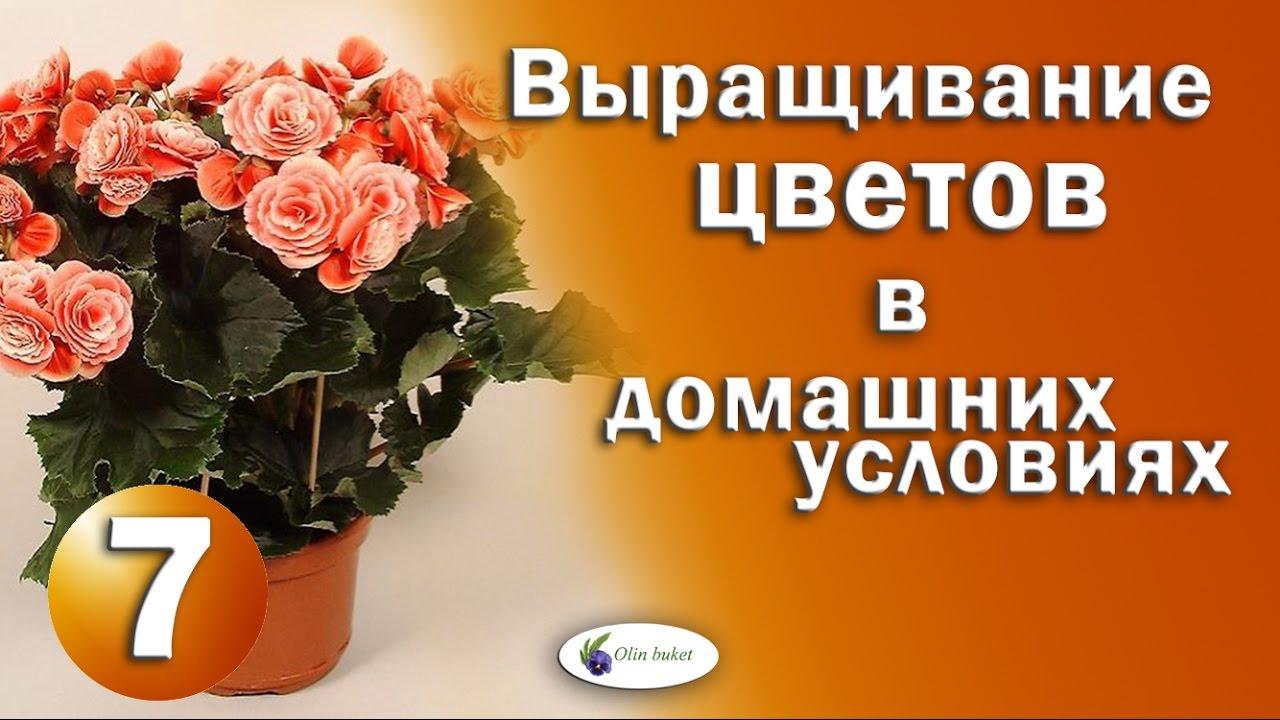 Букеты цветов в корзине
