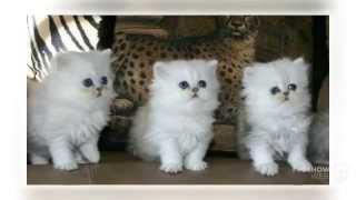 Кошки, коты и котята, милые котята.