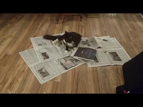 Larry Love Newspaper
