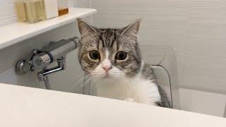 長風呂してると溺れてないか心配で確認しにくる猫がこちらです…w