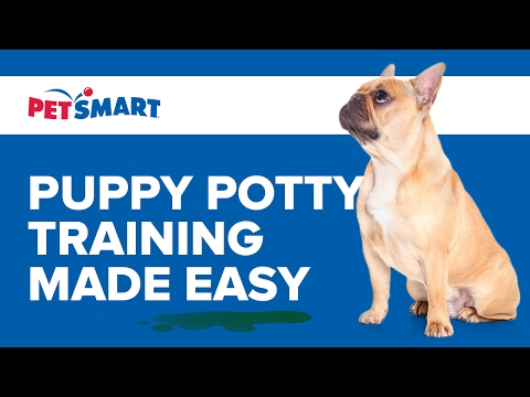 petsmart-can-help:-puppy-potty-training-made-easy