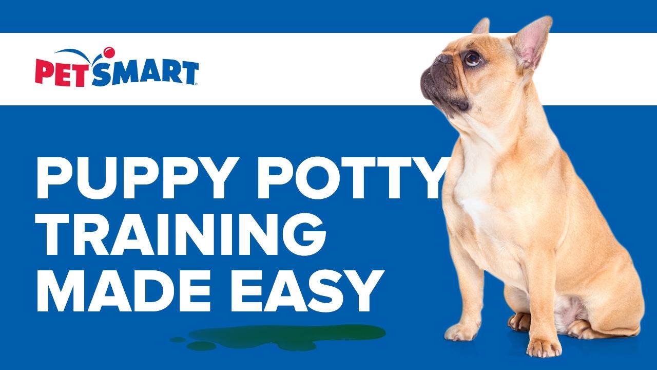 Litter Box For Dogs At Petsmart Bruin Blog