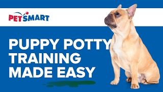 PetSmart Can Help: Puppy Potty Training Made Easy