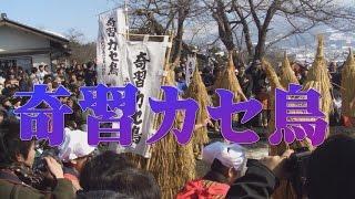 上山城でのカセ鳥2008年の模様です.