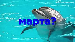 Казанский дельфинарий. Подарим эмоции вместе!