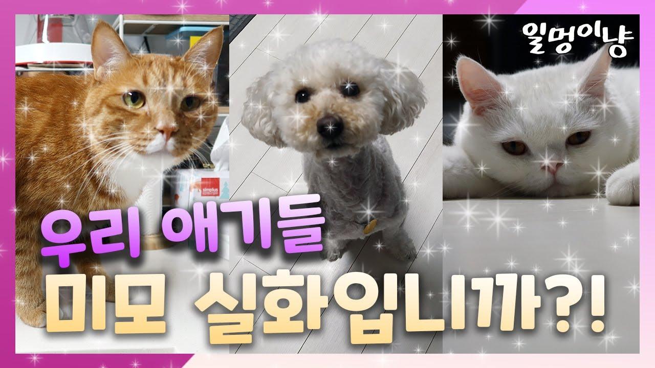 [SUB] 화질 오졌다... 고양이 강아지 미모 종결 (The final boss of cuteness)