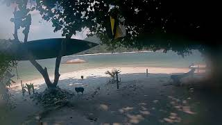 Sailing Schipperkes favorite beach at low tide in Malaysia during Covid