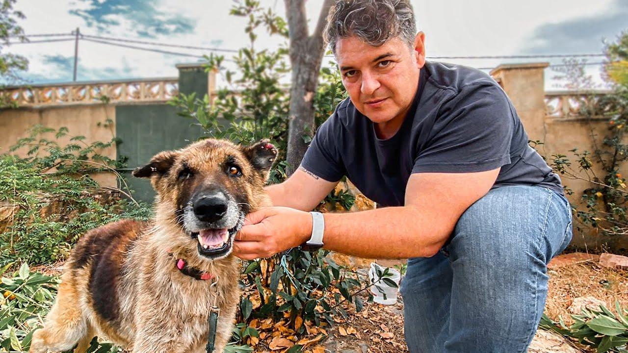 EMERGENCY! Emaciated German Shepherd eaten alive by fleas and ticks needs your help!