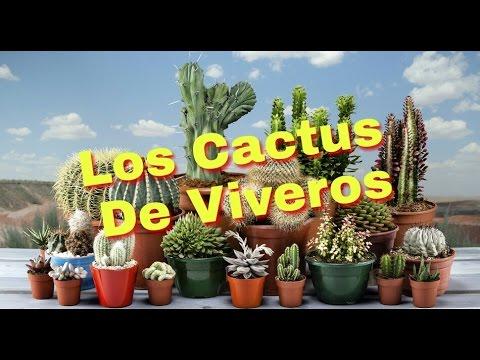 Los cactus de vivero youtube for Vivero de cactus