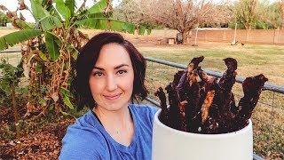 AMAZING Homegrown Jerky: Oven or Dehydrator method
