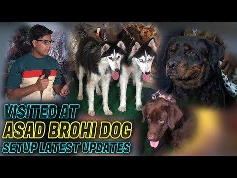 Visited at Asad Brohi Dogs Setup Rottweiler huskies Dogs for sale Jamshed Asmi Informative Channel