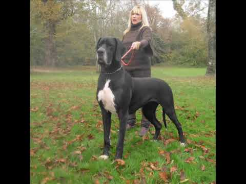 top 10 de las mojeres razas de perros - YouTube