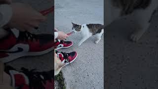 고양이는 츄르츄르♡
