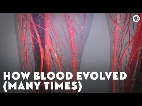 How Blood Evolved