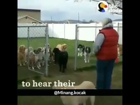 Kocak!!! Absen sekolah anjing