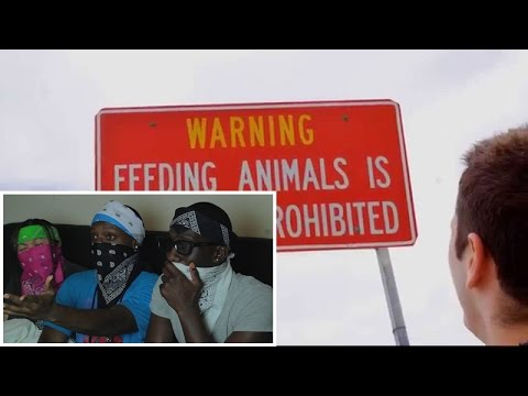 Don't Feed the Animals! Reaction