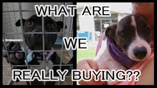 Pet Shops | What are you really buying?
