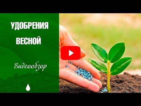 Какие удобрения вносить весной? Азотные удобрения.